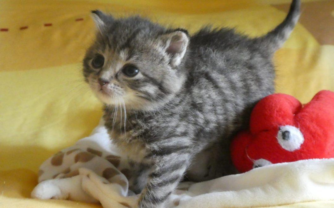 4 kleine Tigerles ohne Mama