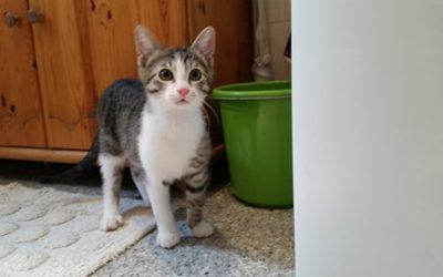 Ivan – junger Katzenbub