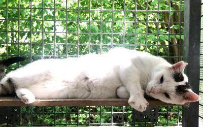 Nepomuk – ein zahnloser älterer Tiger :+)