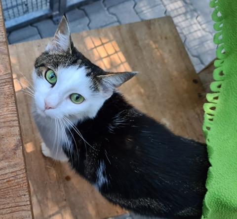 Sina – eine Katzen-Oma in top Form :+)