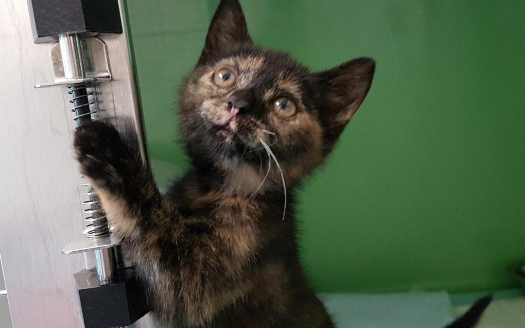 kleines Katzenmädel Sarah