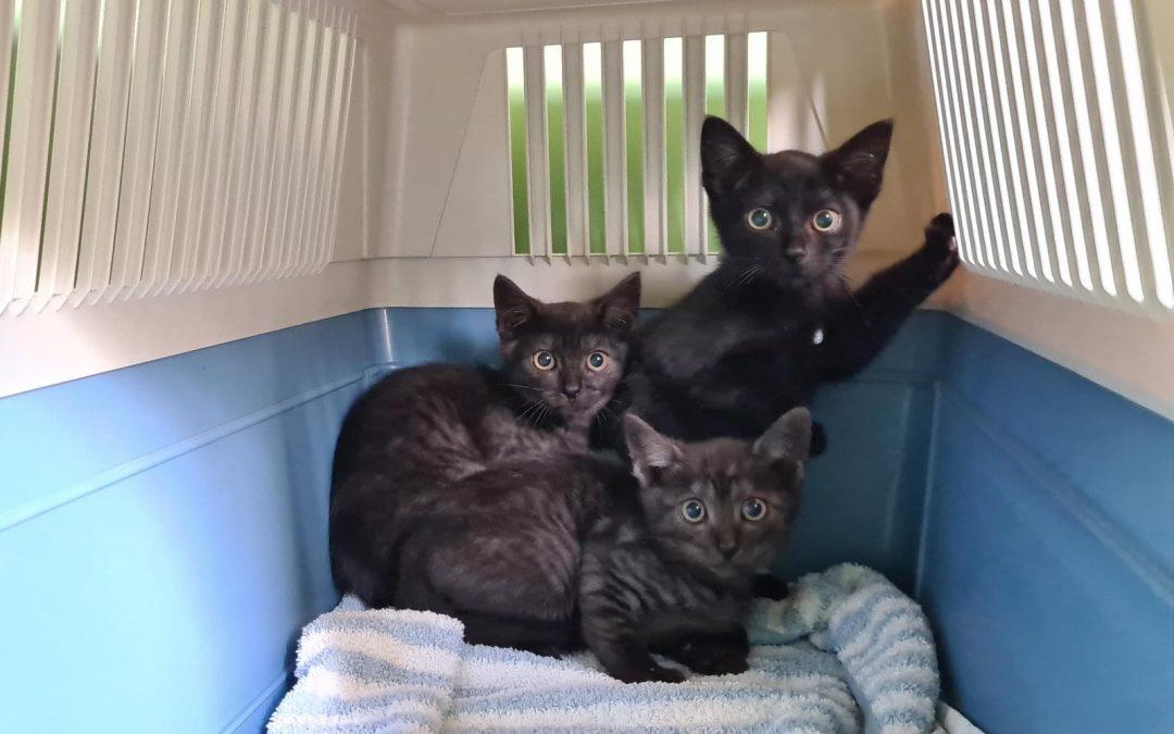 Katzenflüsterer gefunden, für 5 wilde Kerle :+)