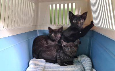 Katzenflüsterer gesucht für 5 wilde Kerle :+)