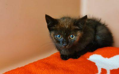 Dilara – kleines Katzenmädel