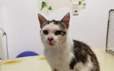 Mira – zierliche kleine Katzenlady