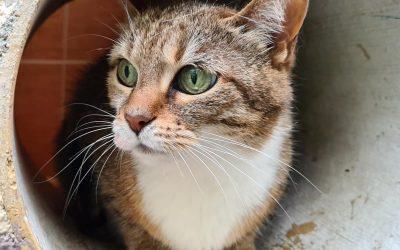 Katzen-Oma Luisa wünscht sich ein letztes 'Für-immer-Zuhause'