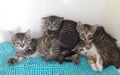 5 schüchterne kleine Tigerkinder