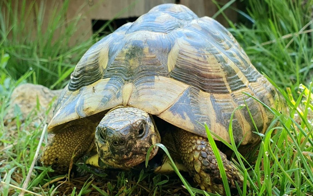 Schildkröte Seppi sucht artgerechtes Zuhause