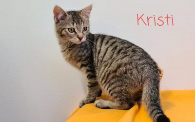 Katzenkind Kristi