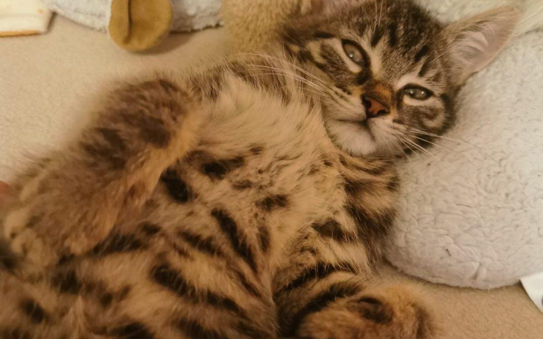 süßer kleiner Leopold