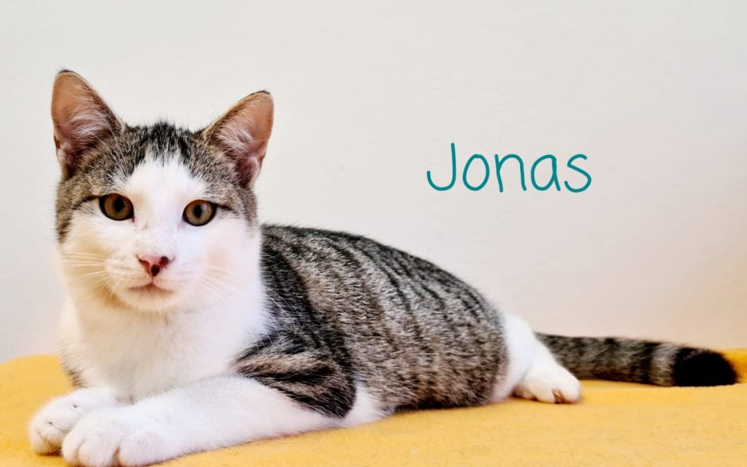 Katzenbub Jonas