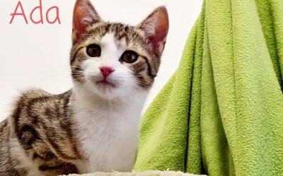Ada – kleines Katzenmädel sucht liebe Familie