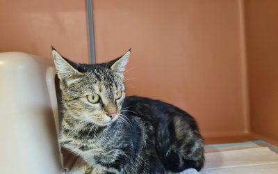 Katzenlady Madame – eine getigerte Schönheit