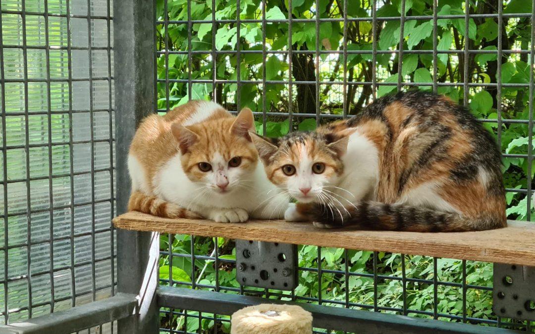 Tobi und Philomena – zwei scheue Fellnasen