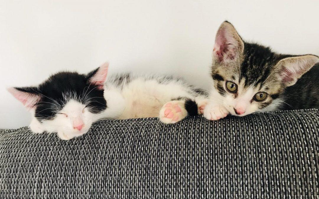 Ben und Linus – zwei kleine Herzensbrecher Katerle