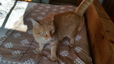 Garfield – ein Prachtexemplar von einem Kater :+)