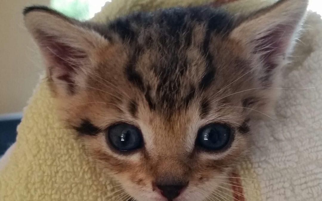 Katzenbabies gefunden, Amberg Fuchsleite
