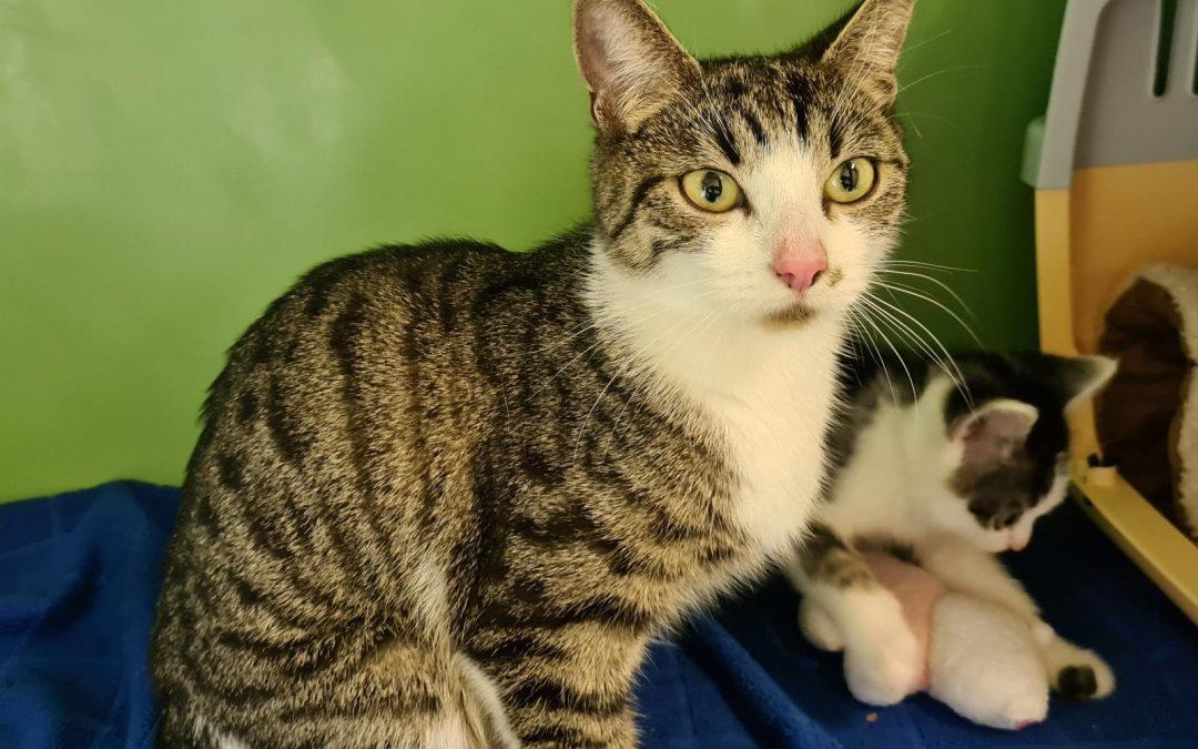 Katzenmama Shila und ihre zwei Zwetschger – dringend Pflegestelle gesucht !