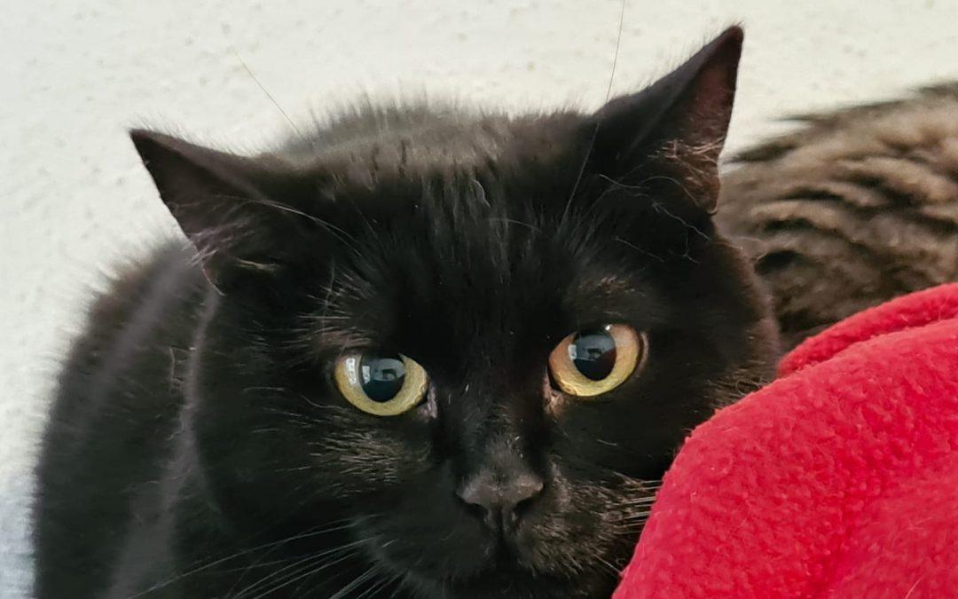 Katzenlady Sheila – die Unsichtbare :+(