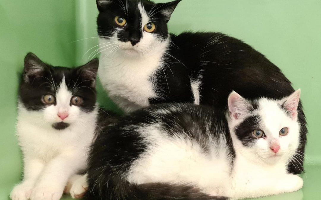 Katzenmama mit zwei Babies gefunden in Birgland / Dollmannsberg