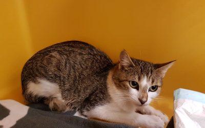 Katzenlady Isa