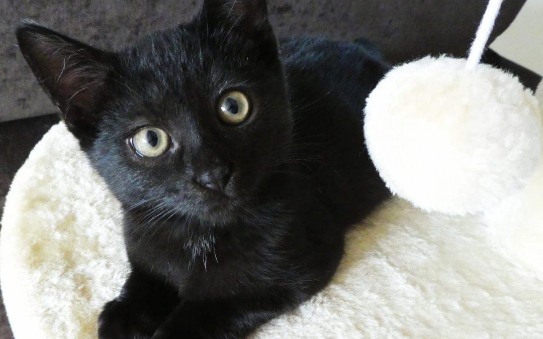 Lennox und Lewis – zwei freche kleine Panther :+)