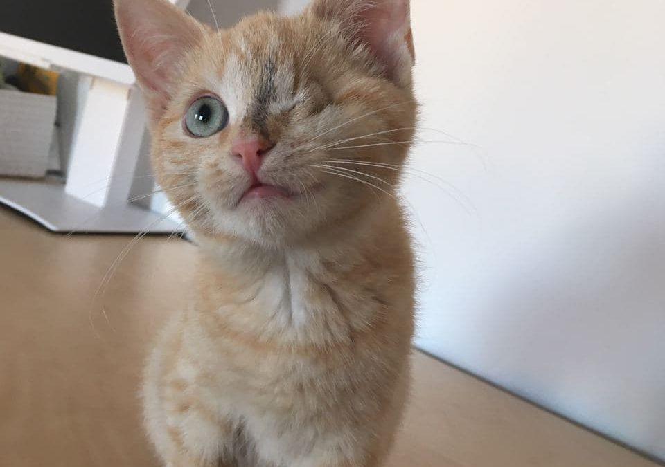 Aurora – das kleine Piraten Katzenmädel