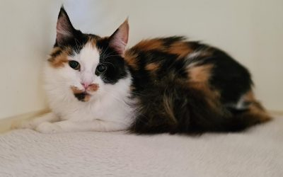 Katzenlady Sansa – eine Diva ? Niemals ! :+)