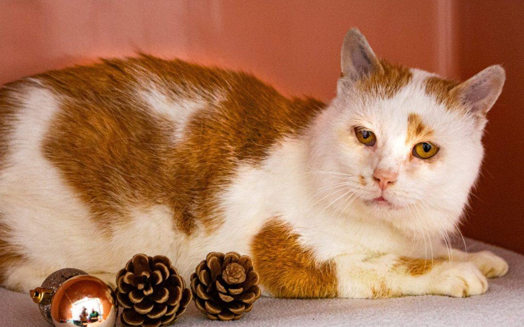 Igor – so ein lieber Kater !! Leider ist der Katzen Opa FIV positiv ……