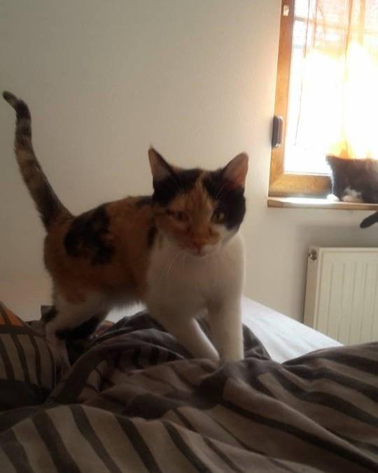 2 hübsche Katzenmädels suchen DRINGEND neues Zuhause