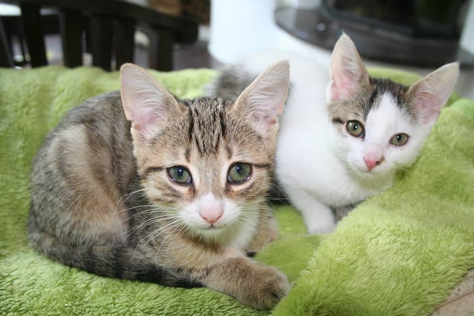 Lanzelot und Annabell – zwei ganz besondere Katzenkinder