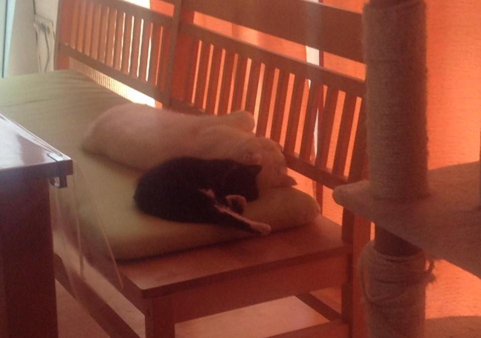 Katzenmädchen Ruby – Baby von Emma