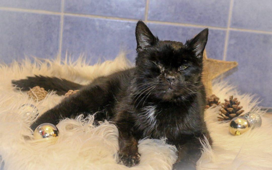 Anastasia – liebe Katzen-Omi sucht 'letztes' Zuhause