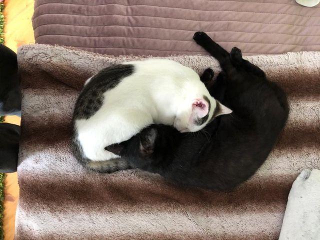 Tessa und Timo – zwei wie Pech und Schwefel :+)