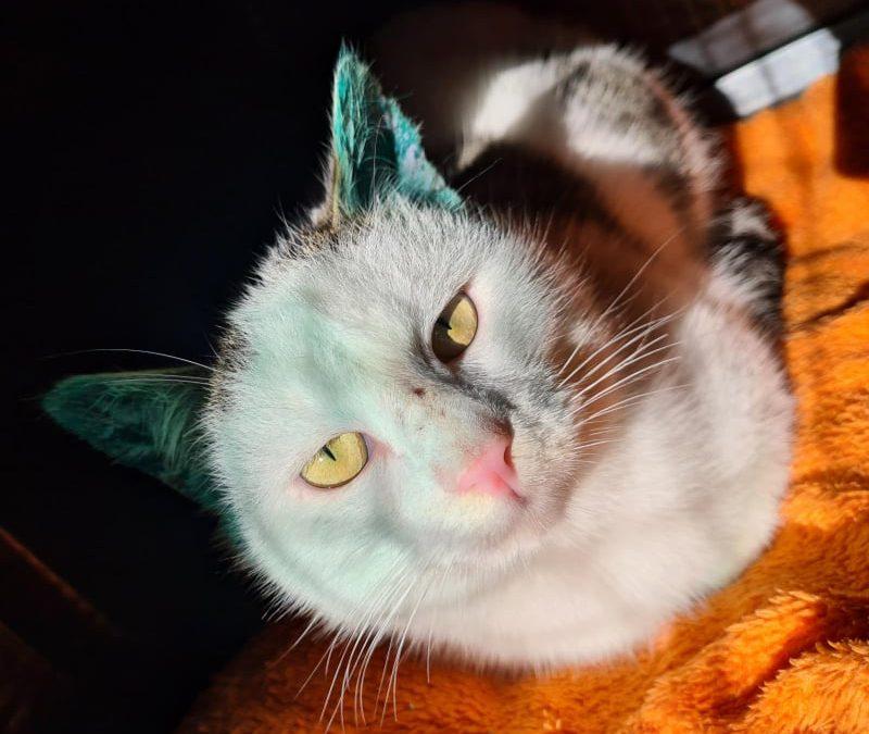 Louis mit den grünen Ohren :+))))