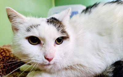 Münzi – unsere Katzen Omi