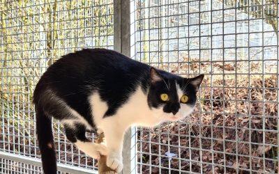 Katzenlady Insa – eine scheue Lady