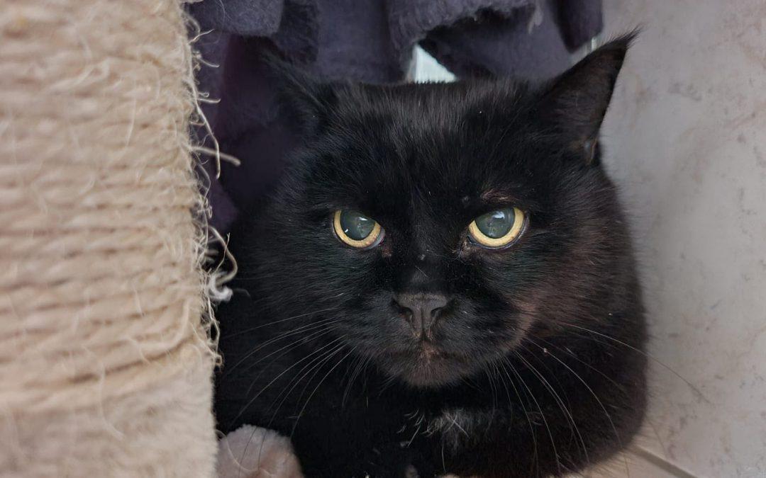 Katzen Opi Brian – ein 'gstandenes Mannsbild'