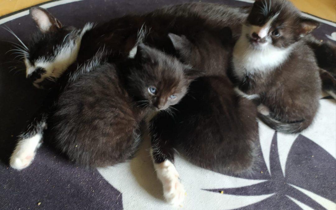 Katzenmama Nina und ihr Trio