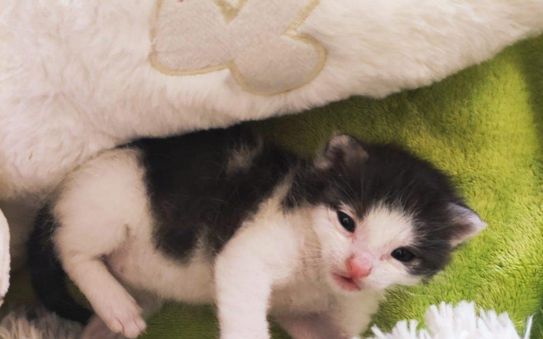 Katzenbaby gefunden Illschwang / Pürschläg 🐈