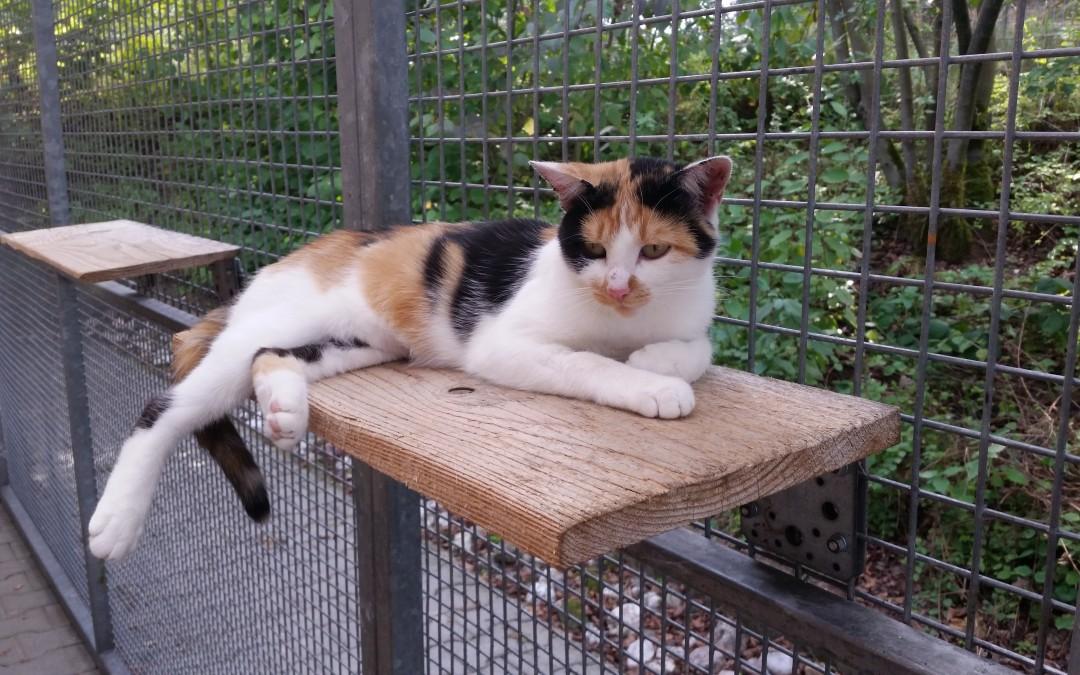 Katze Antoinette