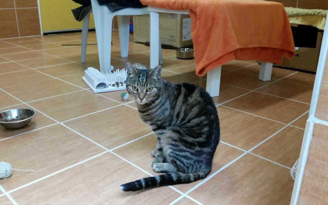 Katze Amalia (jetzt Piwie)