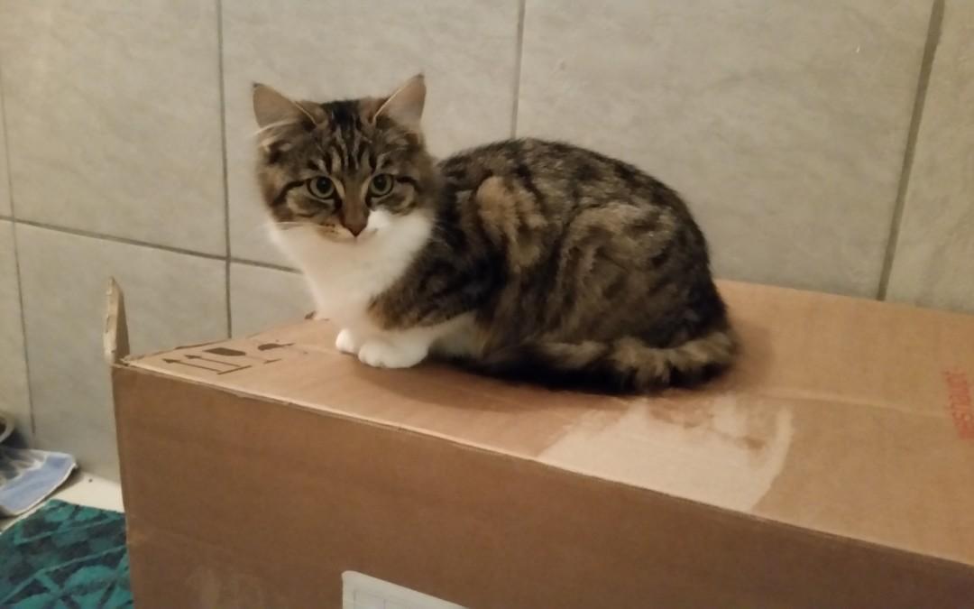 Katze Annabelle