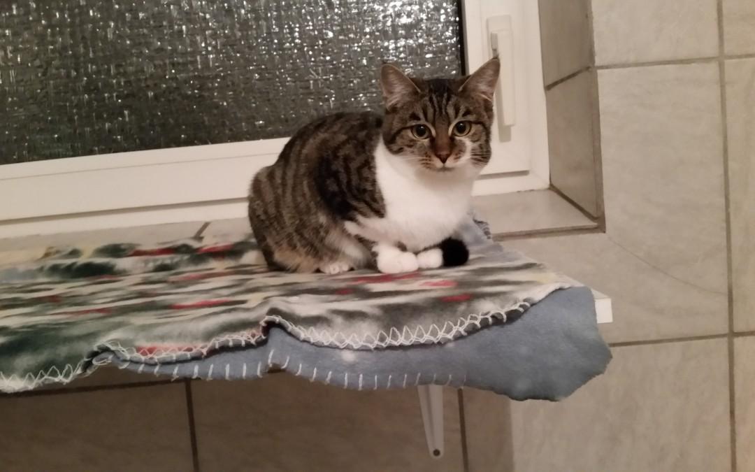 Katze Amy