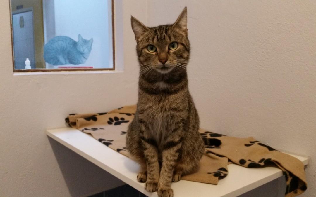 Katze 'Kiwi'