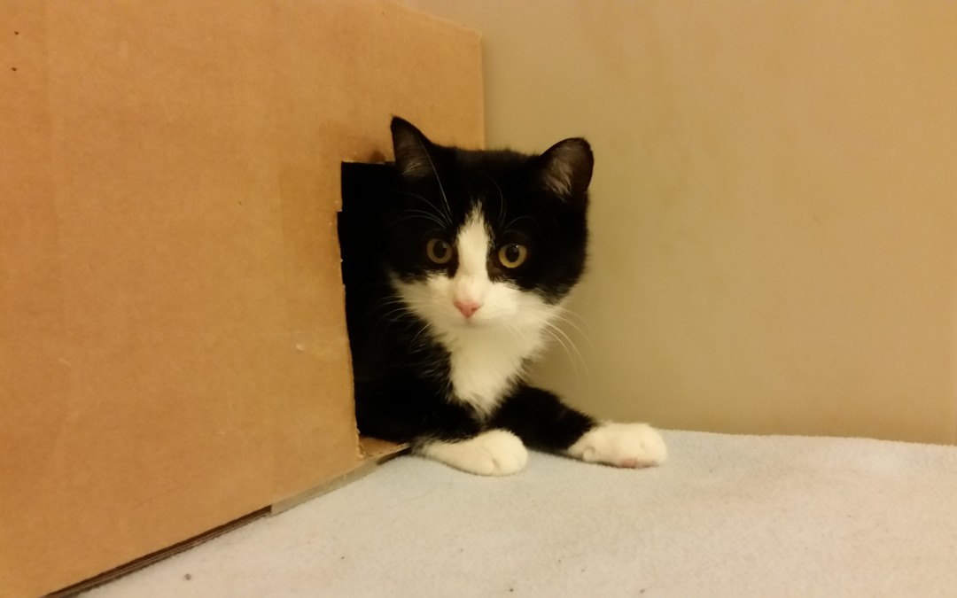 Katze Carola