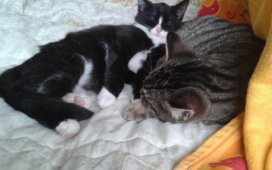 Leni und Max (Babies von Kiwi)