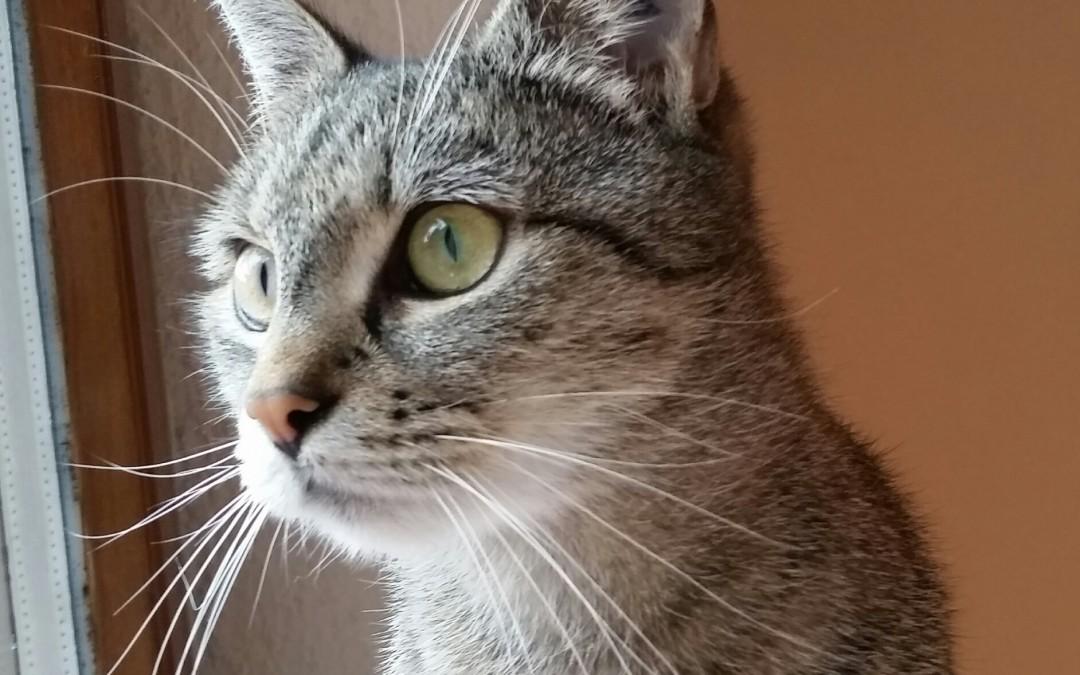 Tigerlady Leni