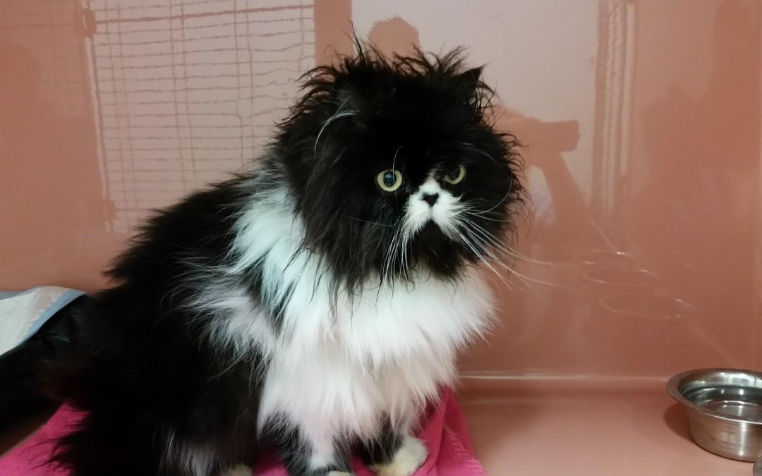 Katze Uschi
