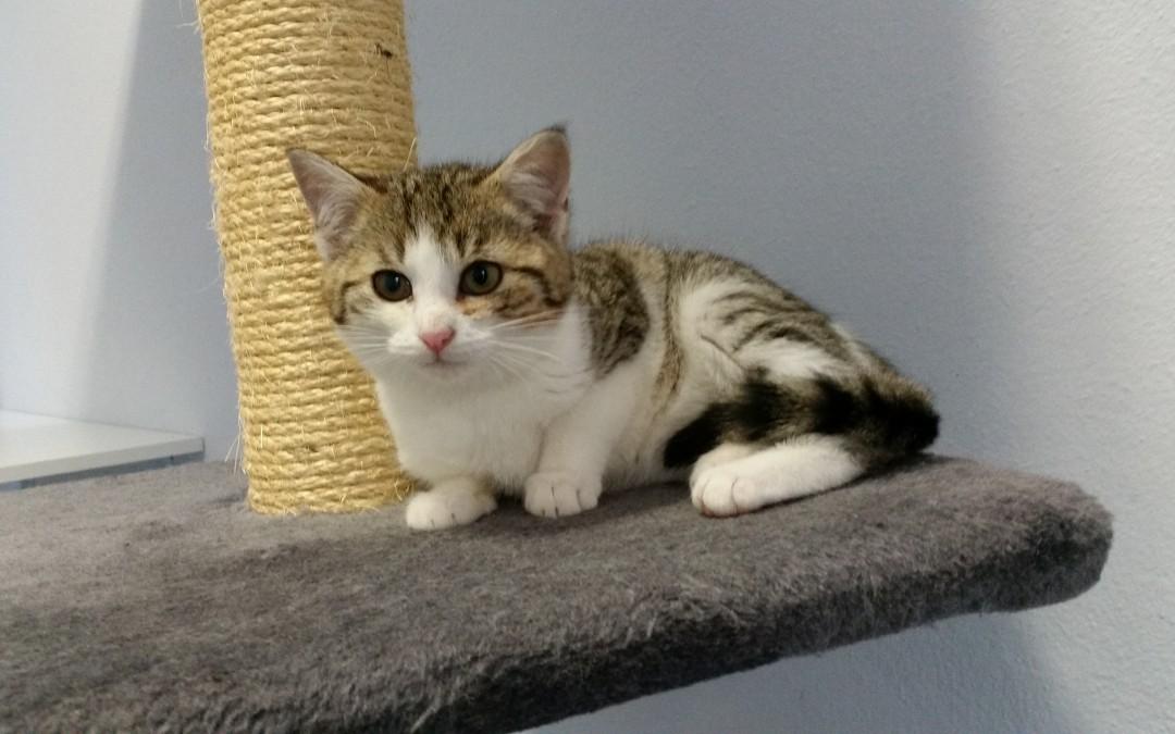 Katzenkind Maja